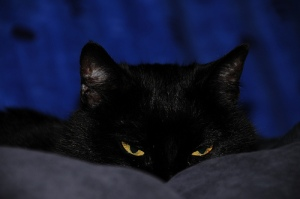 Black-Cats4