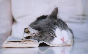 kitten books