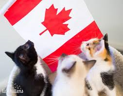 canada day kittens